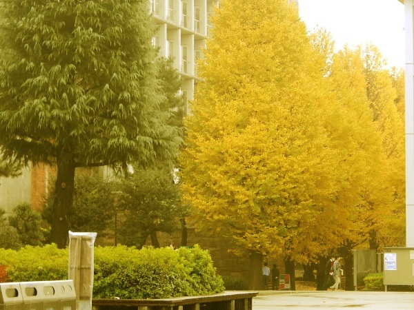 KEIO_Univ_IDEA_000b.jpg